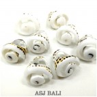 tiger seashells finger rings organic bali