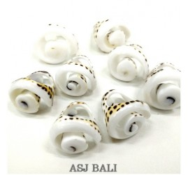 tiger seashells finger rings organic bali