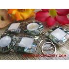 Paua Shells Stainless Bracelet