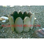 MOP Shells Bracelets Stretches