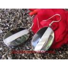 Seashells Paua Earring