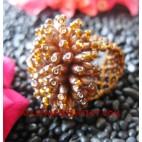 Beads Ring Natural