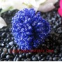 Finger Ring Beading Seed