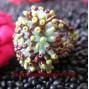 Finger Rings Bead Multi Color